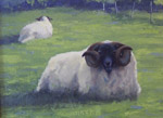 sheep in glen lyon